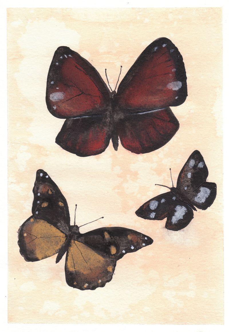 Butterflyephemera081610