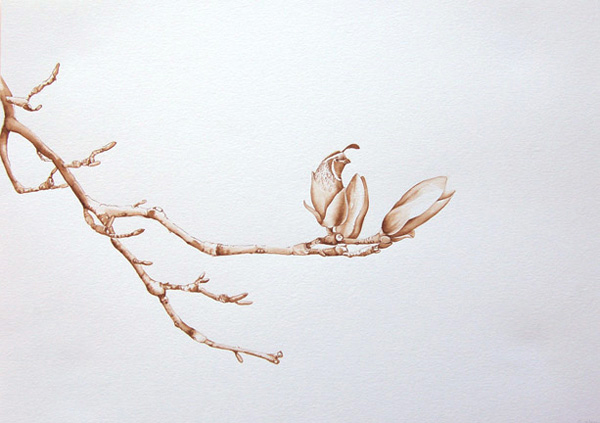 California_quail_magnolia